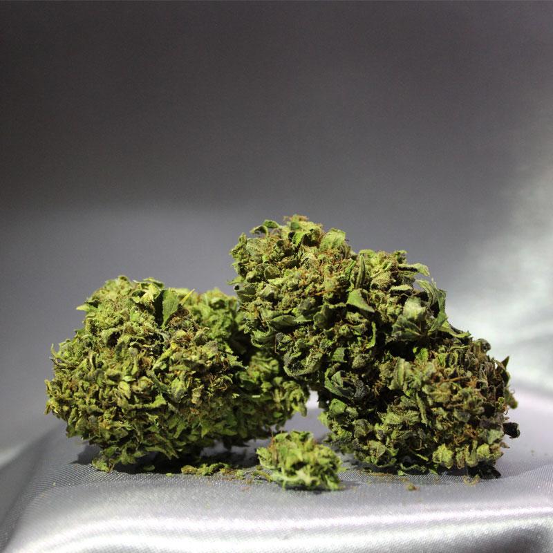 Immagine di Infiorescenza calabrese CBD Therapy - greenhouse